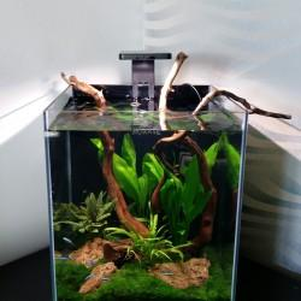 Projekt akwarium