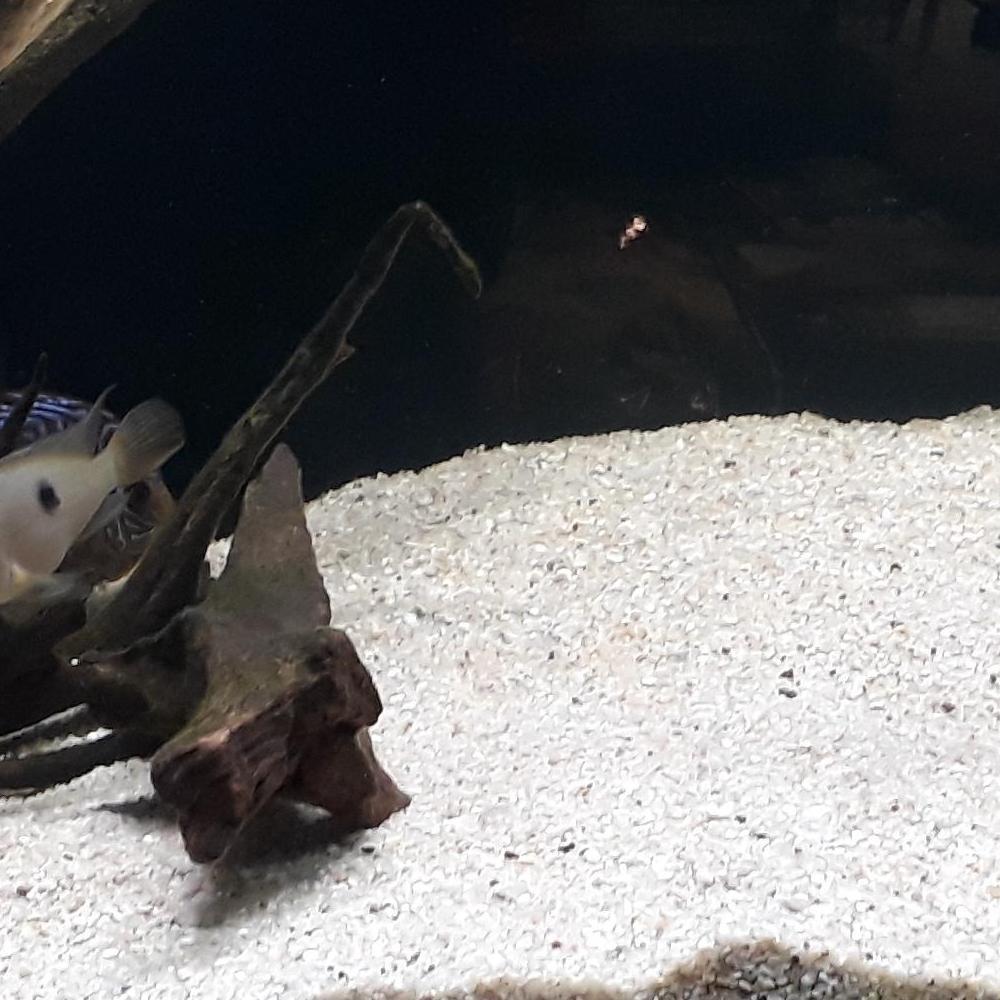 Akwarium z białym piaskiem i rybkami