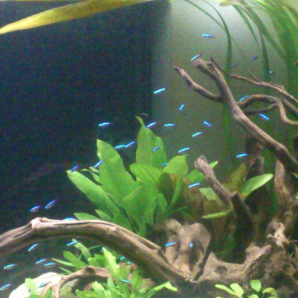 Projekt akwarium z rybkami